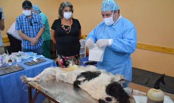 Municipio de Viña del Mar continúa  programa sostenido de esterilización con intervención de 3.000 nuevas mascotas