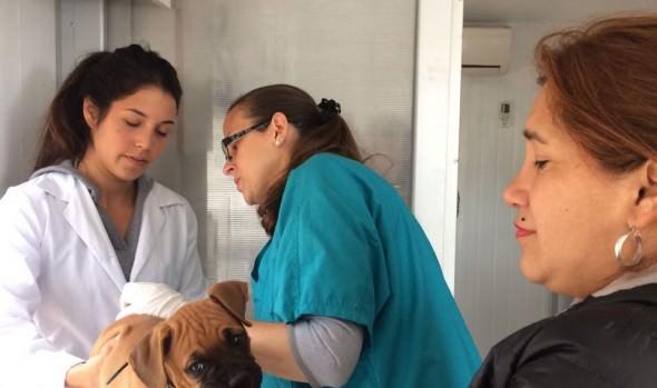 Municipio de Viña del Mar realizará operativo veterinario para Comité Nueva Esperanza de Forestal Alto