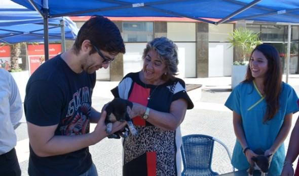Municipalidad de Viña del Mar refuerza programa de tenencia responsable de mascotas