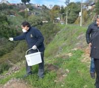 Municipio de Viña del Mar desarrolla intenso programa de desratización en sectores urbanos