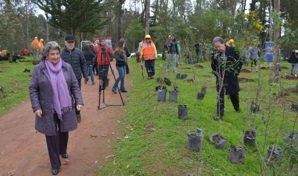 Municipio de Viña del Mar da nueva vida a parque de la Quinta Vergara con especies nativas