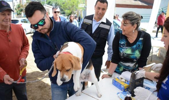 Municipio de Viña del Mar realizará operativos veterinarios en sectores altos de la ciudad