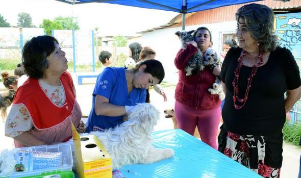 Municipio de Viña del Mar extiende  operativos veterinarios a  diciembre