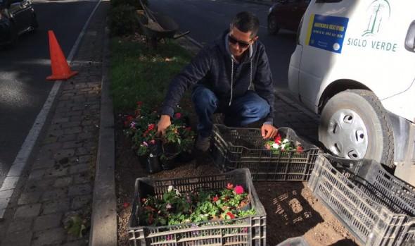 Municipio de Viña del Mar ornamenta principales calles de la comuna con nuevas especies florales