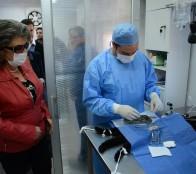 Municipalidad de Viña del Mar adjudicó licitación para esterilizar 3 mil mascotas este año