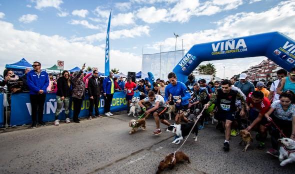 """Reñaca será el punto de partida de las Perrorunning """"Ven a correr con tu mascota"""" para este año"""