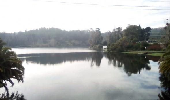 Municipio de Viña del Mar realiza etapa final de limpieza de laguna Sausalito