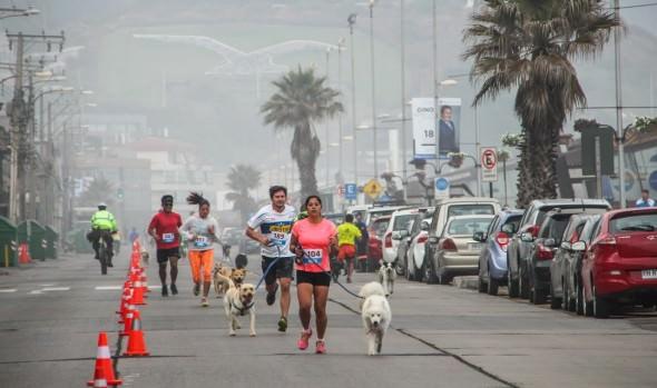 Municipalidad de Viña del Mar invita a participar en 3ª fecha de perrorunning en Reñaca