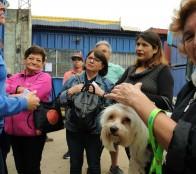 Municipio de Viña del Mar informa pasos para inscripción de mascotas en el registro Nacional