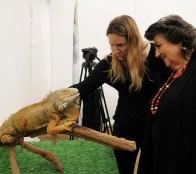 """Desde implantación de microchips hasta exhibición de animales exóticos, ofrece """"Expo Animales Viña 2019"""""""