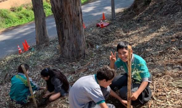 Con operativo forestal, Viña del Mar conmemoró el Día Internacional de la Tierra