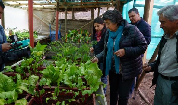 Municipio de Viña del Mar ofrece a la comunidad talleres de huerto y cultivo