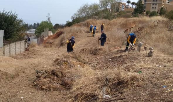 Municipio de Viña del Mar avanza en construcción de cortafuegos