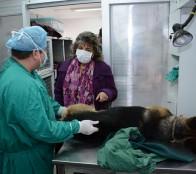 Municipio de Viña del Mar iniciará nuevo proceso de esterilización para 5 mil mascotas
