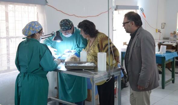 Municipio de Viña del Mar supera las 20 mil mascotas esterilizadas en la última década