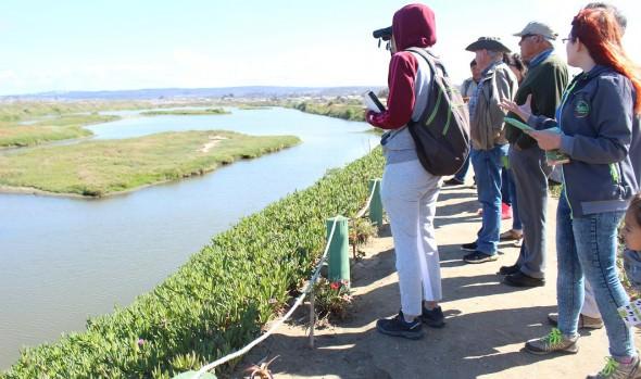 Festival de Aves de Viña se celebrará con dos excursiones en marzo