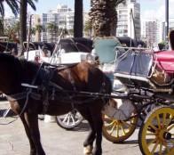 Concejo municipal de Viña del Mar aprueba derogación de Ordenanza para el transporte de pasajeros en coches victorias