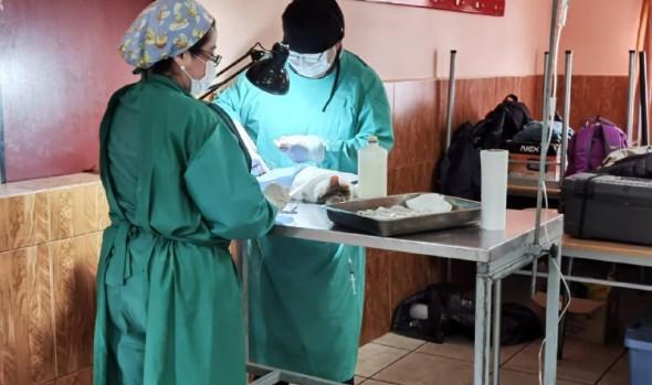 Municipio de Viña del mar retoma programa de esterilización de mascotas